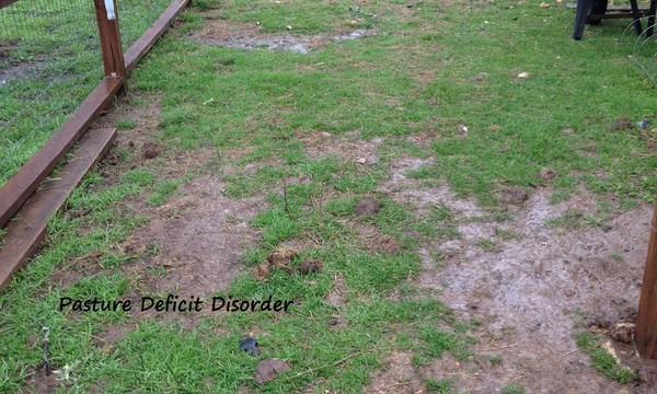 Dealing With Drainage Issues
