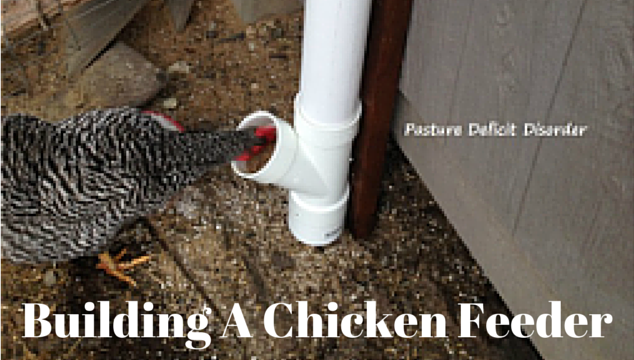 Building a Chicken Feeder That Cut Our Feed Bill in Half